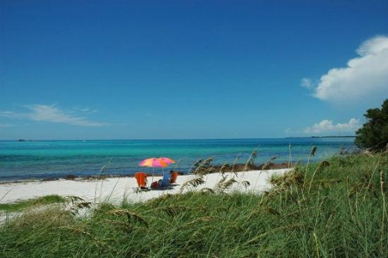 Bahia Honda State Park Campgrounds: Gorgeous sand, sky, and beach vegetation