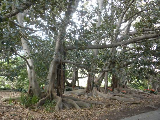 Trellis Picture Of South Coast Botanic Garden Palos Verdes Estates Tripadvisor
