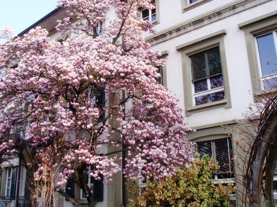 Rose Garden (Rosengarten): Una magnolia in fiore