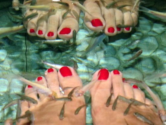 Kenko Fish Spa : My feet in the fish tank!