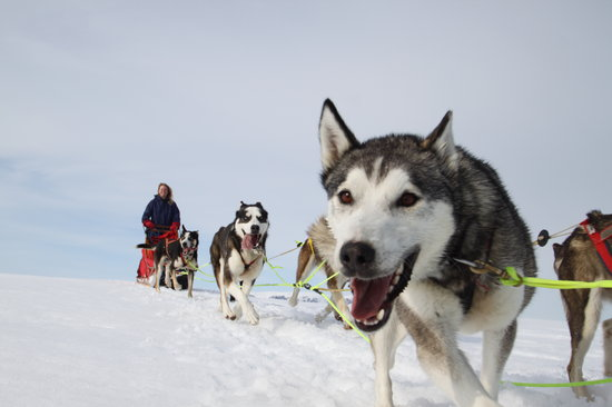 Geilo Husky Day Tours