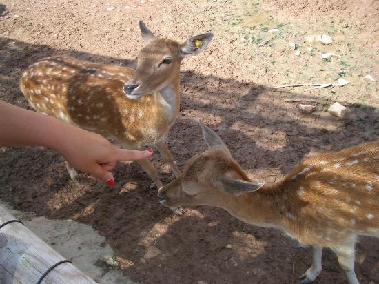 Terra Natura Murcia : gli animali sono molto vicini e ben tenuti