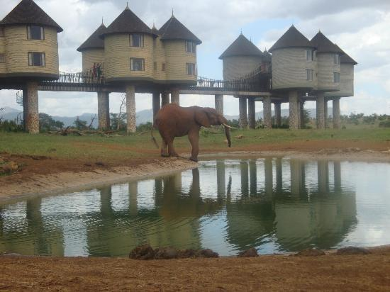 Sarova Salt Lick Game Lodge: The waterhole