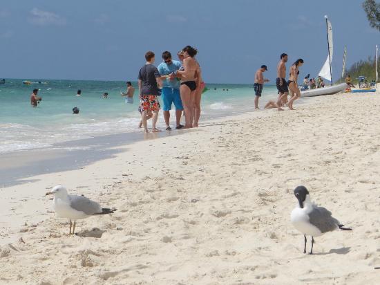Viva Wyndham Fortuna Beach An All Inclusive Resort Playa