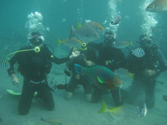 Portulano Dive Resort: Intro Dive