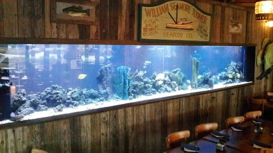 The Crazy Crab Jarvis Creek: Largest Saltwater Aquarium on Hilton Head Island!
