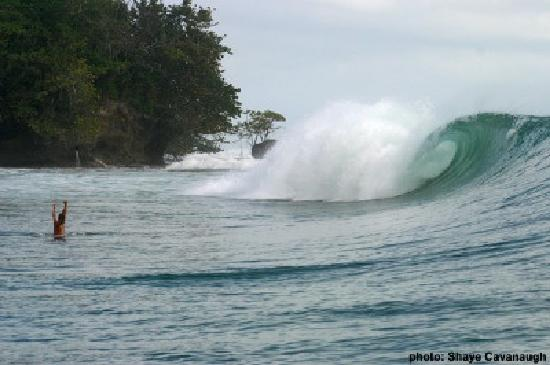 La Buga Dive Center & Surf School : Surfing in Bocas del Toro