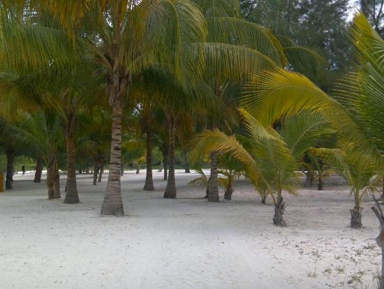 Isla Pasión: More of the sand and palm trees