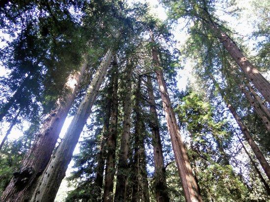 Golden Horizon Tours: Magestic Muir Woods