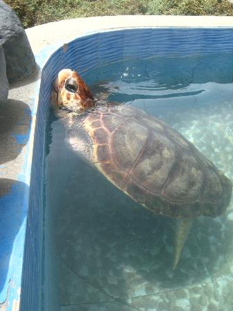 Residencial Goa : turtle sanctuary in Calhau