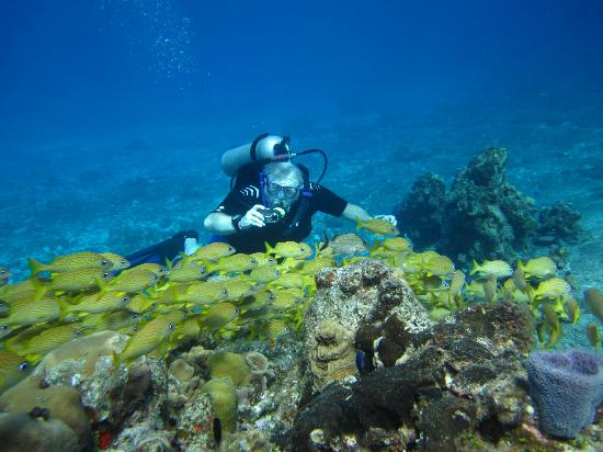Cozumel Coral Reef Private Scuba Diving: Swimming with the fishes - Scuba with Mario