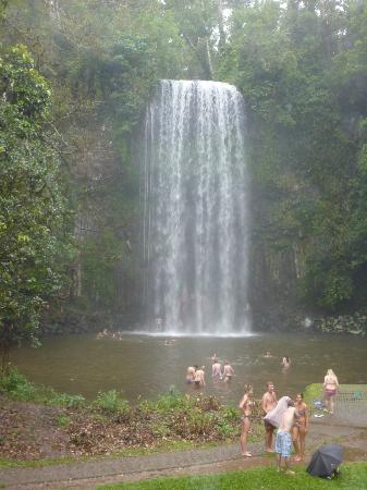 Atherton Tableland : One of the waterfalls where we stopped to swim