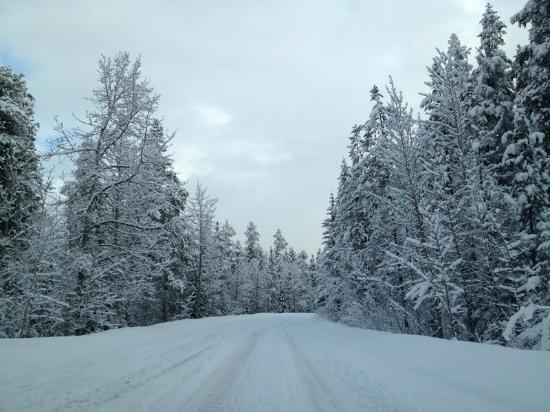 HI-Jasper: The driveway after snow taken from HI jasper hostel