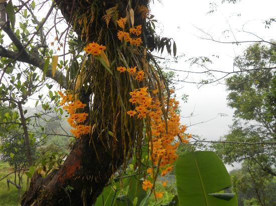 Cherrapunjee Holiday Resort: Flowers in the resort