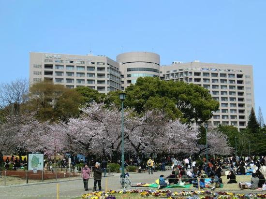 Tsuruma Park: 花見で宴会する人(写真は2011年)