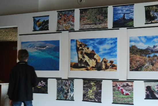 Le Naturoptère : exposition sur les plantes carnivores d'Australie à l'espace Imago