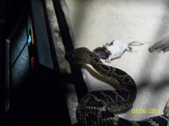 Cape Fear Serpentarium: Feeding time!