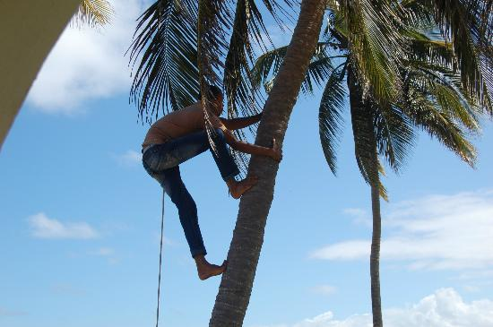 Barefoot Beach Pad: Coconut hunting