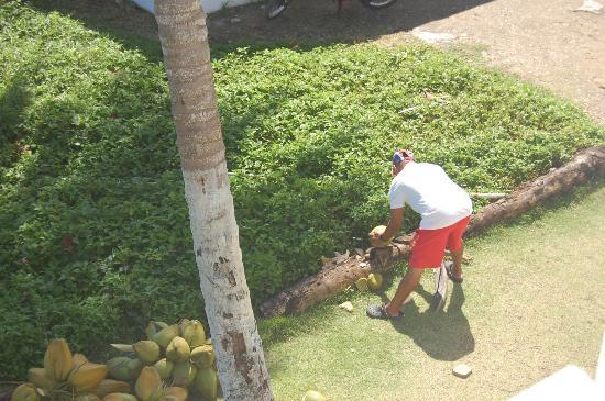 بيرفوت بيتش باد: Andres preparing coconuts