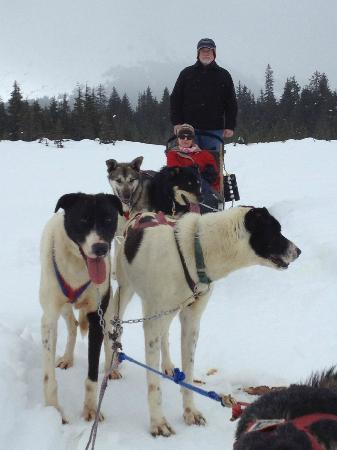 Historic Anchorage Hotel: Dog Mushing in Alyeska