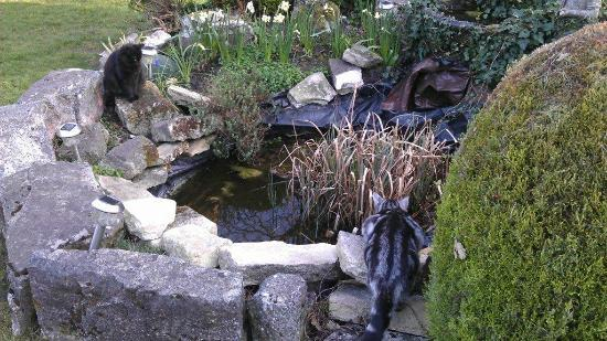 The Yenton: Garden pond with cats...