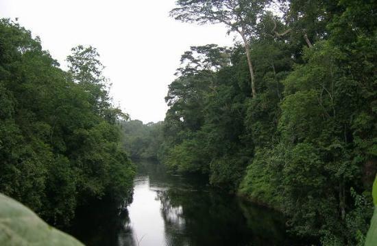 Monte Alen National Park, Ekvatorial-Guinea: Rio Laña
