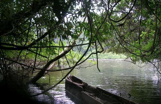 Monte Alen National Park, Equatorial Guinea: Rio Uoro
