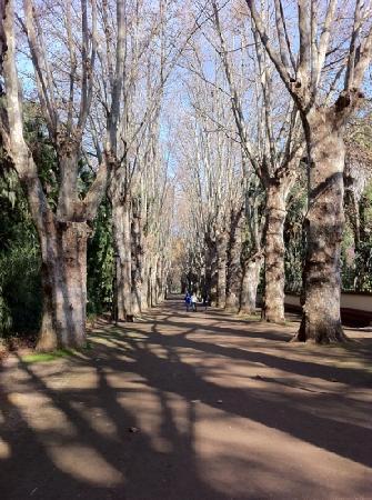 Le Jardin d'Essai du Hamma : must visit