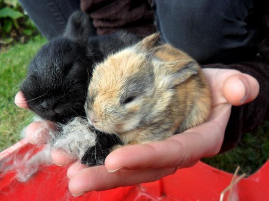 Les Gites de Kerdalidec: The bunnies had 5 babies