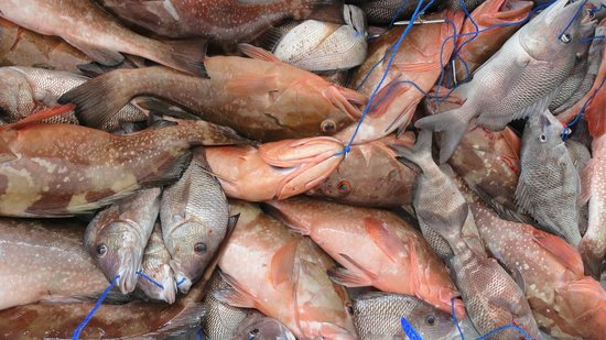 Hubbard's Marina: More Red Grouper, Gray Snapper