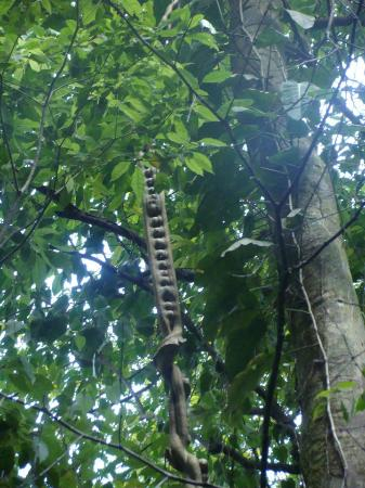 Las Cascadas Lodge : Monkey Ladder, On apprend plein de chose et on le retient