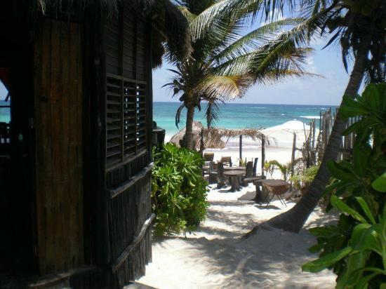Las Palmas Maya : The walk to the beach at Om