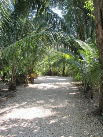 Nosara Paradise Rentals : Path to rentals
