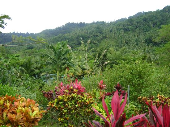 Hibiscus Valley Inn: view from my bungalow - you just need to love it!