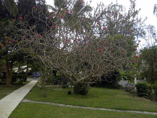 ذا ليجيند جاردن كوندوز: Nice trees