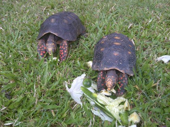 ذا ليجيند جاردن كوندوز: Speedy and Gonzalez (ask how they were named)