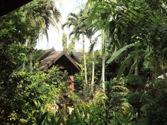 Paradise Beach Resort: Paradise Rooms in the Jungle