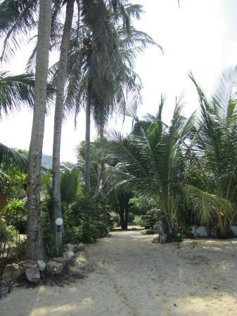 """بانج بو فيلدج: Bangpo Village """"avenue"""""""
