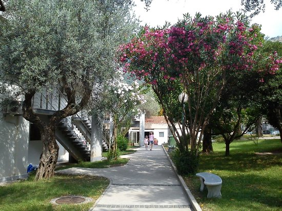 Photo of Hotel Vile Oliva Petrovac