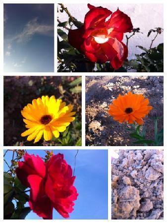 Rancho Blanco: Las flores del Rancho