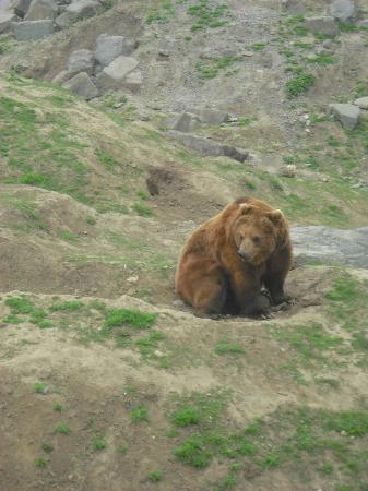 """Zoom Erlebniswelt - Themenbereich """"Alaska"""""""