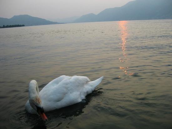 Hotel International Iseo: Lake Iseo
