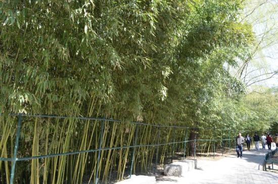 Haidian Park: bamboo