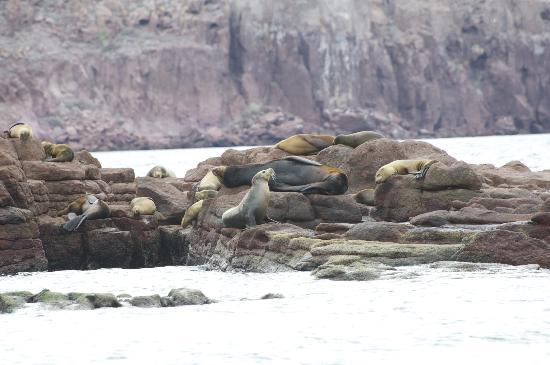 Posada LunaSol Hotel: Tintarella di leoni marini nell'Isla Espiritu Santo