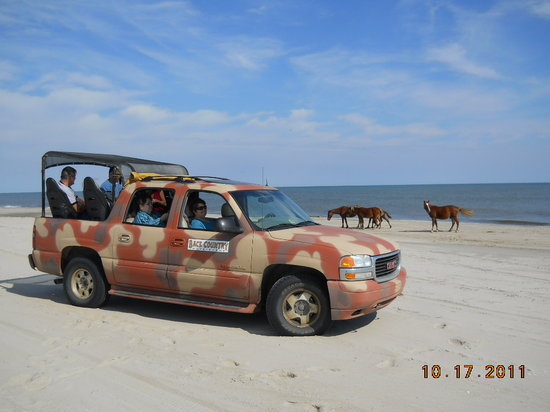 Back Country Safari Tours