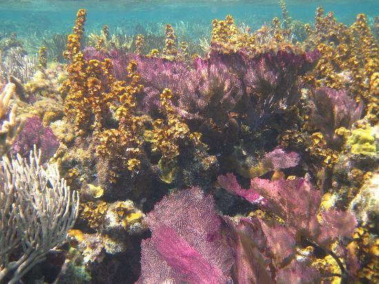 Half Moon Caye National Monument: Underwater at Blue Hole