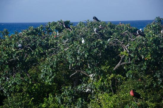 Half Moon Caye National Monument: Bird colony from observation stand