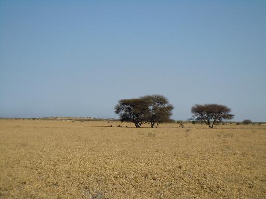 Kalahari Desert Camp: unendliche Weite