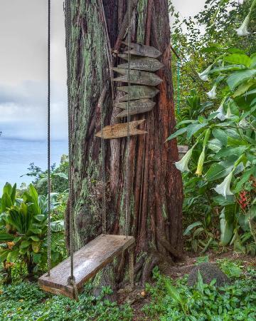 Waipio Rim : tree swing....
