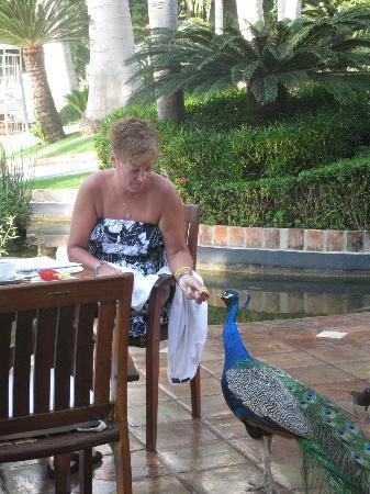 Casa Velas: Breakfast with the Peacock